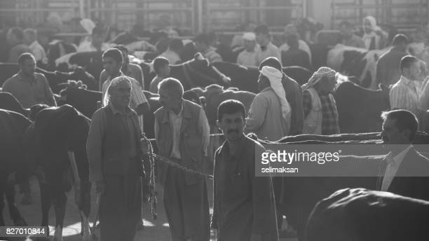 General View Of Livestock Market In The Eve Of Eid Al-Adha In Sanliurfa,Tuekey