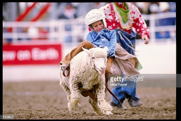 General view of mutton bustin during the Calgary Stampede in Calgary Canada Mandatory Credit Mike Powell /Allsport