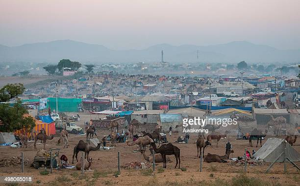 A general view of one of the areas of the camp on November 20 2015 in Pushkar India Held every year in November at the time of the full moon Pushkar...
