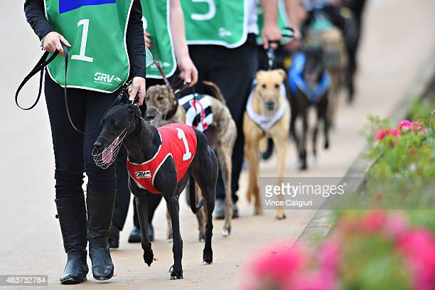 General view of race meeting at The Meadows Greyhound track on February 18 2015 in Melbourne Australia The Greyhound racing industry is under...