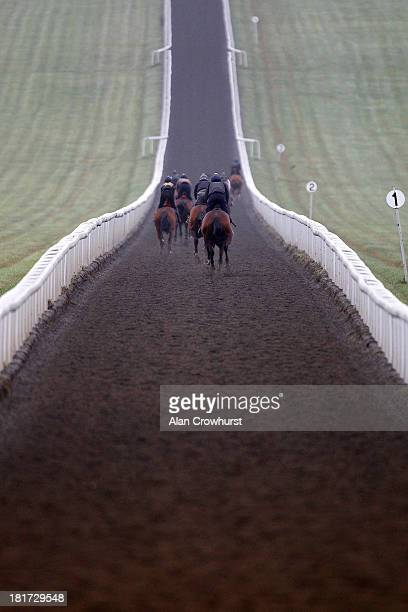 A general view of racehorses working on Warren Hill gallops on September 24 2013 in Newmarket England