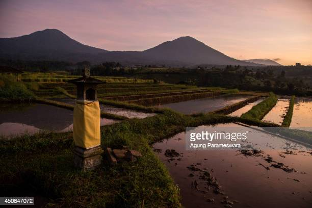 General view of rice terrace at jatiluwih on June 19 2014 in Tabanan Bali Indonesia Industry Officials and analysts are expecting Indonesia to more...