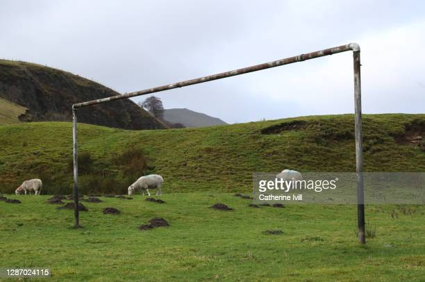 General view of sheep in-front of goalposts on a rural football pitch in the Peak District on November 22, 2020 in Hope Valley, Derbyshire .