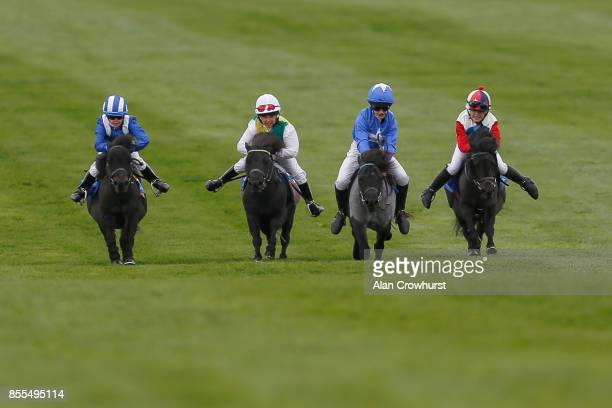 A general view of shetland pony racing at Newmarket racecourse on September 29 2017 in Newmarket United Kingdom