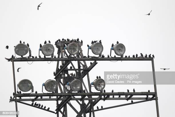 General view of some birds perched on a floodlight at Edgar Street home of Hereford United FC