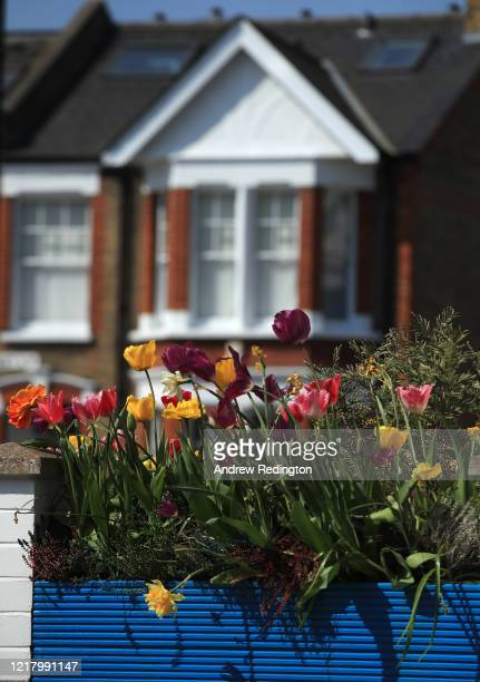 A general view of Spring flowers on April 10 2020 in London England There have been over 60000 reported cases of the coronavirus in the United...