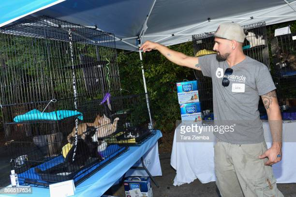 General view of the atmosphere during the unveiling of 'Cat Luv' Mural at Los Angeles Animal Shelter at The Amanda Foundation on October 25 2017 in...