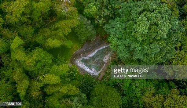 General view of the botanical garden in Quindio, Colombia on July 6, 2020. - When the pandemic broke out in the second most biodiverse country in the...