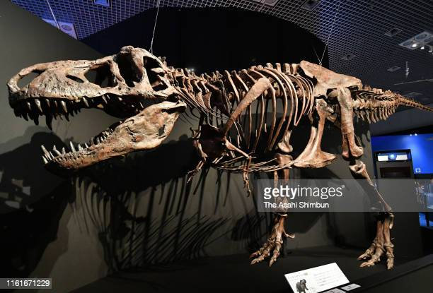 A general view of the Dinosaur Expo 2019 at the National Museum of Nature and Science Tokyo on July 12 2019 in Tokyo Japan