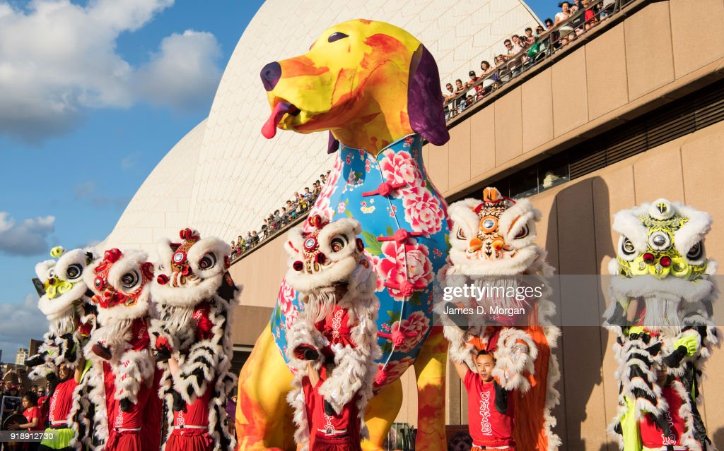 Image result for images of year of the dog in Sydney