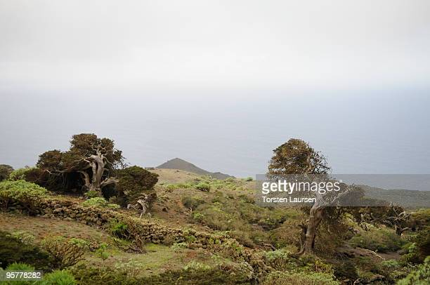 A general view of the El Sabinar trees on El Hierro Island January 13 2010 in El Hierro Island Spain The island inspired and features in the new film...