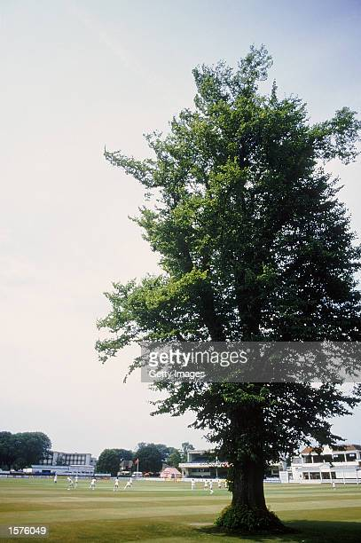 General view of the famous lime tree on the outfield of the St Lawrence Ground in Canterbury Kent Mandatory Credit AllsportUK/Getty Images