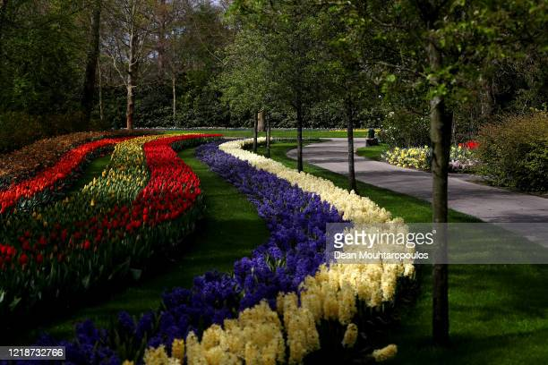 A general view of the Keukenhof Gardens also known as the Garden of Europe one of the world's largest flower gardens closed to the public on April 13...