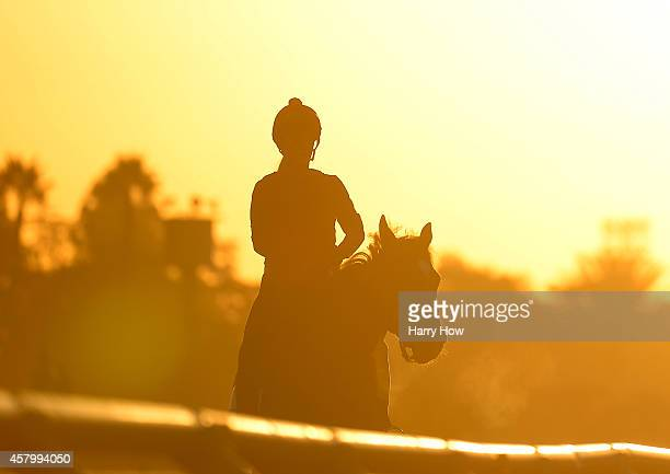 General view of the morning training session during the 2014 Breeder's Cup at Santa Anita Park on October 28 2014 in Arcadia California