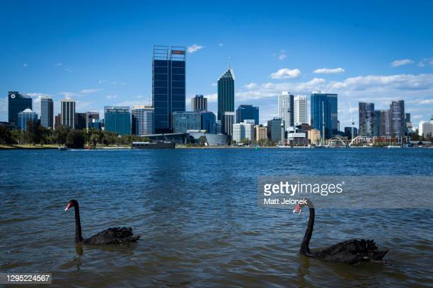 General view of the Perth City skyline with two native Black Swans on January 8, 2021 in Perth, Australia. The Western Australian state has been free...