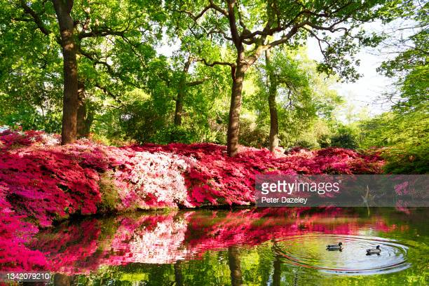 General view of the pond at Isabella Plantation in Richmond Park, on May 12, 2015 in London, United Kingdom.
