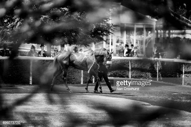 A general view of the pre parade ring on day 2 of Royal Ascot at Ascot Racecourse on June 21 2017 in Ascot England