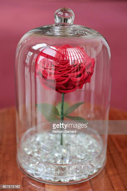 60 Top Beauty And The Beast Pictures Photos Images Getty Images