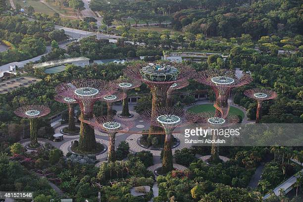 A general view of the Supertree Grove at the Gardens By The Bay on July 22 2015 in Singapore