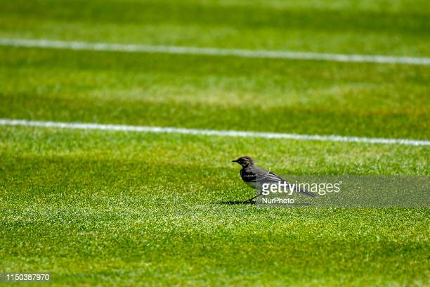General view of training sessions during day one of Fever Tree Championships at Queens Club London on June 17 2019