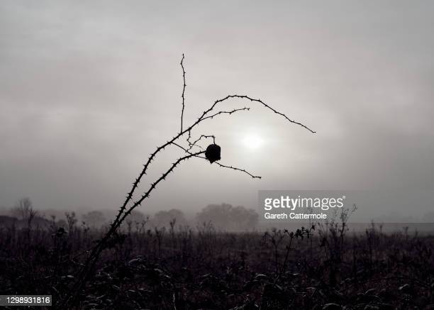 General view of trees in a field near Stansted Airport on January 27, 2021 in Stansted, United Kingdom.