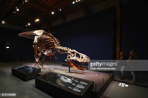 A general view of Trix the female the TRex exhibition as vistors look on at the Naturalis or Natural History Museum of Leiden on October 17 2016 in...