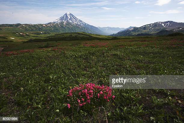 A general view of Vilyuchinskaya sopka volcano on August 19 2007 in Kamchatka Russia Kamchatka has the highest density of volcanos and associated...