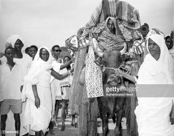 A general view of women leading an ox in Sudan