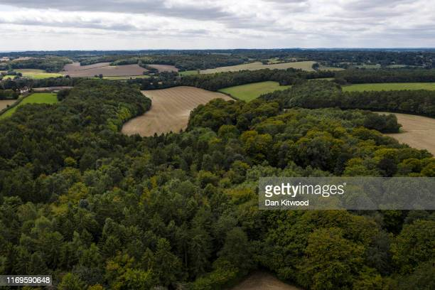A general view of woodland along the proposed HS2 route on August 22 2019 in Great Missenden England The government is to review the project to...