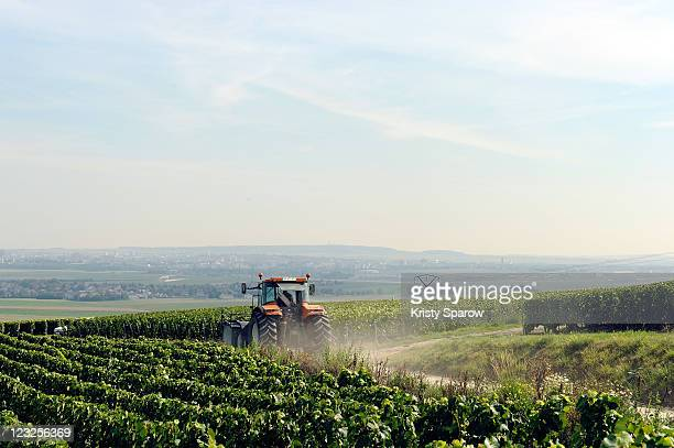 A general view of workers harvesting this years crop during the Champagne Nicolas Feuillatte Vendanges 2011 at the wine processing facility on August...