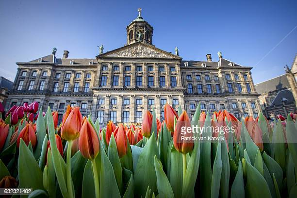 A general view on Dutch National Tulip Day in front of the Royal Palace at Dam Square with the theme 'share joy give tulips' on January 21 2017 in...