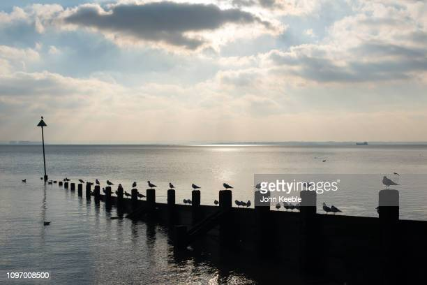 A general view seagulls sitting on wooden posts of a groyne as the sun begins to set on January 20 2019 at Southend on Sea England