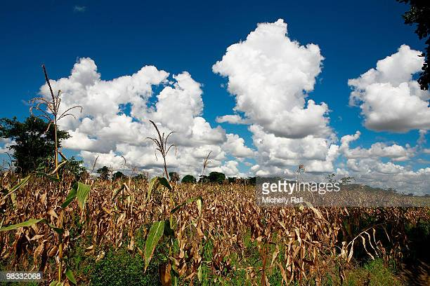 A general view sees a field of crops in Namitete village as Madonna visits the Mphandula Childcare Centre on April 8 2010 in Lilongwe Malawi