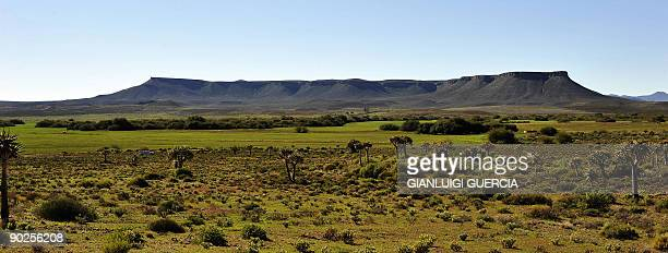 General view shows an Aloe plant forest on August 10 2009 on the outskirt of the small town of Nieuwoudtville in the Northern Cape Spring has arrived...