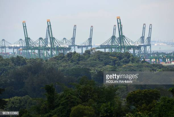 A general view shows cranes rising above trees at the West Coast container port terminal in Singapore on January 9 2018 / AFP PHOTO / ROSLAN RAHMAN