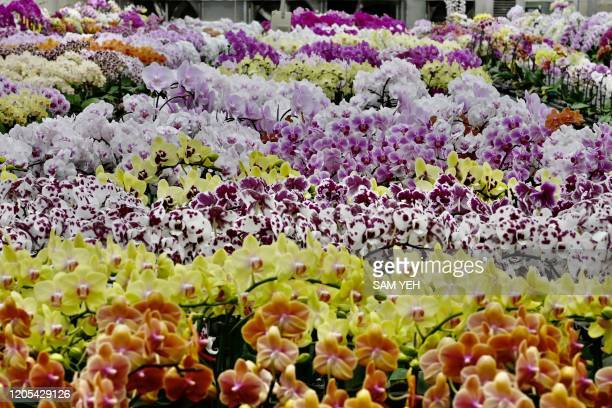 A general view shows orchid flowers at the Char Ming Agriculture showroom in Tainan southern Taiwan on March 6 2020