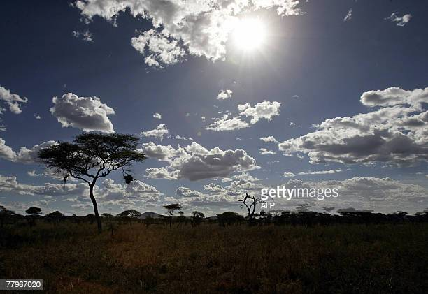 A general view shows Serengeti's National Park northern Tanzania 23 August 2007 The Serengeti is a 60000 squarekm savanna which lies over Tanzania...