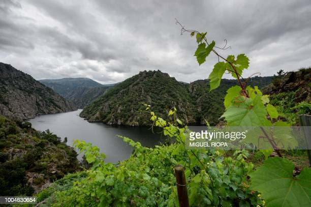 A general view shows the Sil Canyon as seen from a vineyard in Chancis next to the village of Sober in the Galicia region of northwestern Spain on...