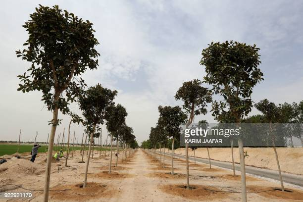 A general view shows trees at the Supreme Committee for Delivery and Legacy Tree Nursery in Doha on February 22 2018 The nursery is growing trees and...