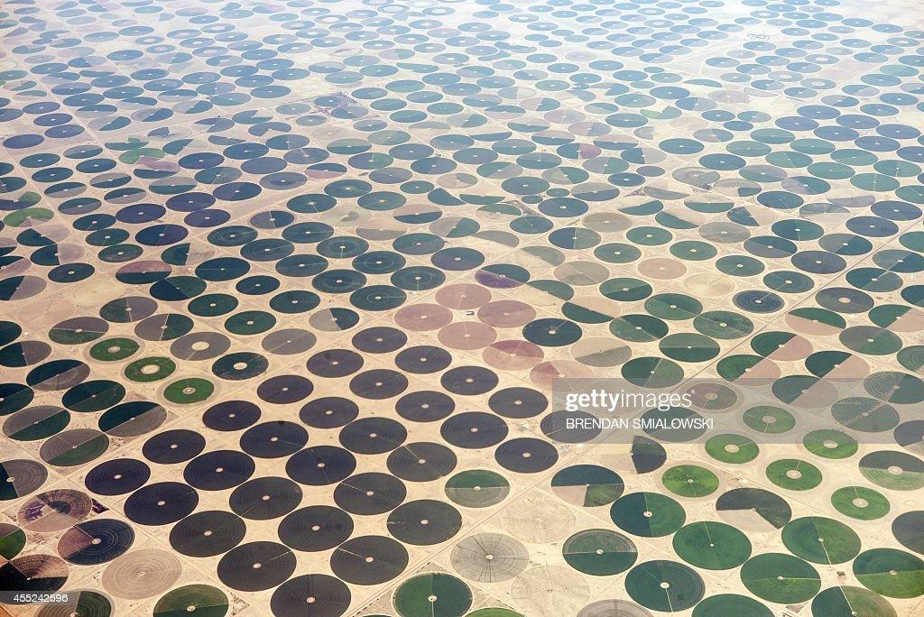 SAUDI-FEATURE-FARM : Nachrichtenfoto