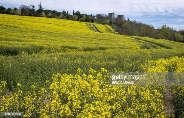 A general view taken on April 8 2019 shows rapeseed fields near Juzes southern France