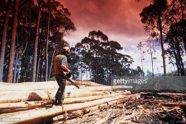 Generic forestry logging 6 June 1996 AFR Picture by PHIL CARRICK