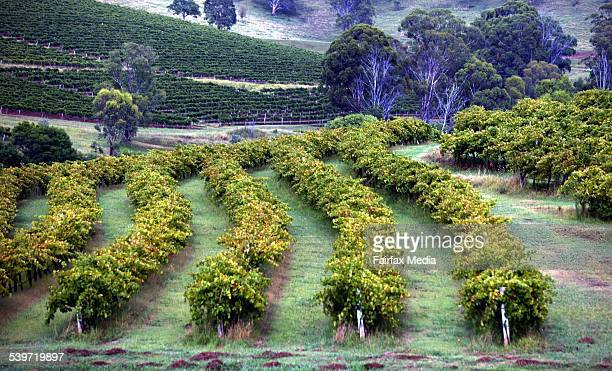 Generic vineyard picture Hunter Valley 29 January 2005 AFR Picture by JIM RICE