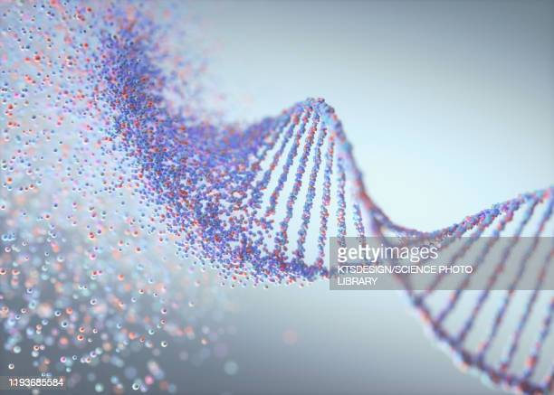 genetic disorder, conceptual illustration - dna stock pictures, royalty-free photos & images