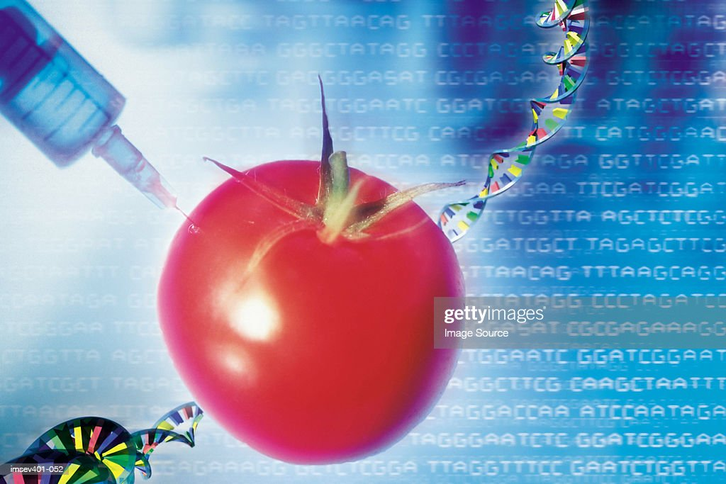 genetic modification ストックフォト getty images