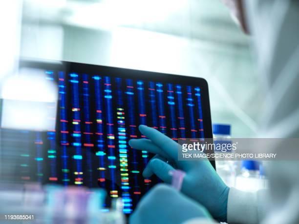 genetic research - genetisk forskning bildbanksfoton och bilder