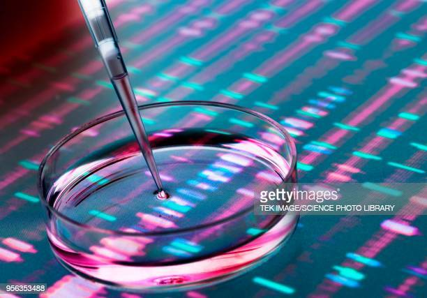 genetic research - science and technology stock pictures, royalty-free photos & images