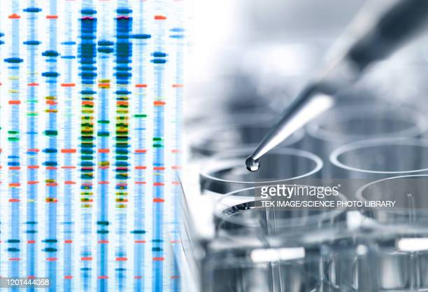 genetic testing - medical research stock pictures, royalty-free photos & images