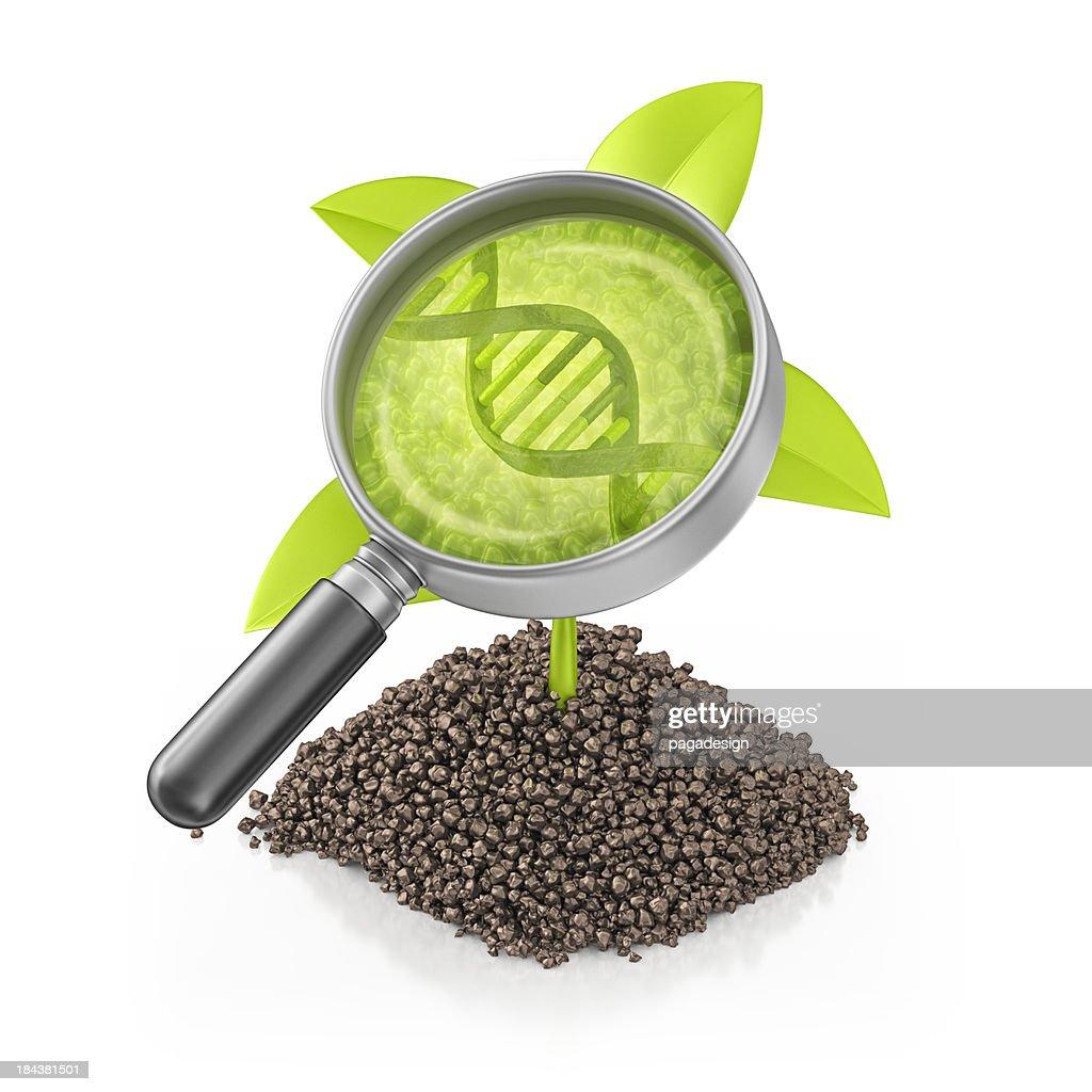 Plante génétiquement modifié : Photo