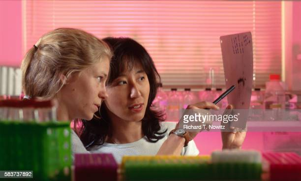 geneticists examining gel x-ray of dna - geneticist stock pictures, royalty-free photos & images